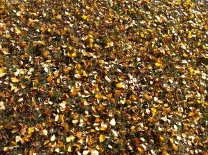 Lite löv och en solig höstdag...