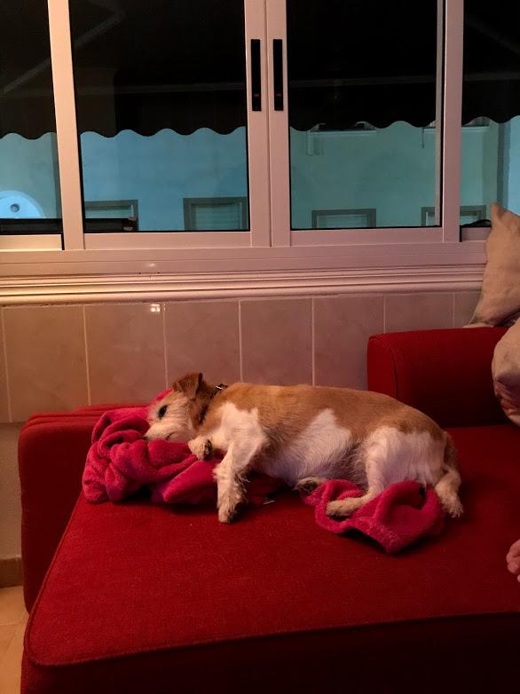 Så här vill Doris mysa nu för tiden, ja även tidigare tyckte hon om att chilla...Doris är cool :)